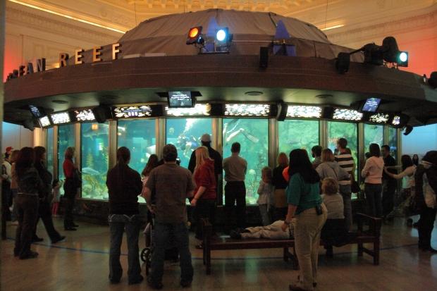 Caribbean_Reef_tank_at_Shedd_Aquarium,_2009-11-15